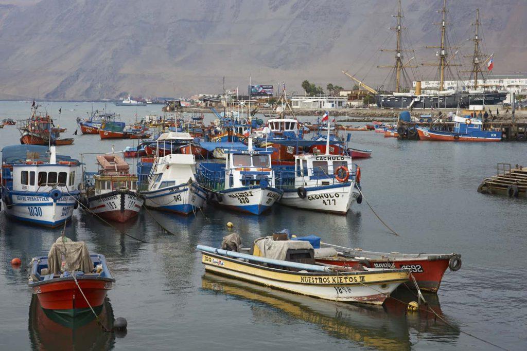 TDLC rechaza consulta sobre subasta pesquera